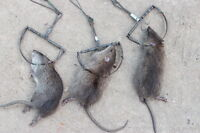 6 x Traps Mouse Rat Hunting STRONG Snap Catch Trap Pest Control Survival Camping