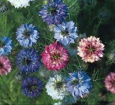 Kings Seeds - Nigella Persian Jewels - 500 Seeds