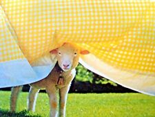 New listing The Little Lamb Phoebe Dunn Ewe Baby Sheep Book Darling Photos Hc W/ Plastic