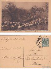 # CORNETO TARQUINIA: IL PASCOLO di E. Balsamo   1912