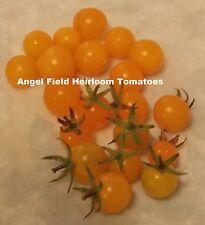 "Cerise Orange Heirloom Tomato Garden Seeds ""20 Seeds"" Free Gift"