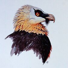 RAPTOR LESOTHO WWF Uccelli UCCELLO BUSTA Primo Giorno 1° FDC 512
