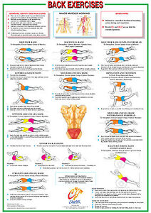 Back Exercise Training Chart Core Muscle Workout Poster