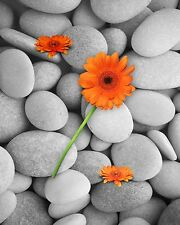 Orange Gray Wall Decor Home Photo Art Surreal Photography Picture Daisies Stones