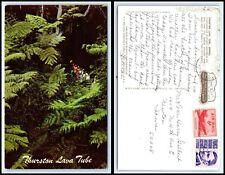 HAWAII Postcard - Thurston Lava Tube P25