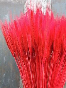 25 PCS DRIED WHEAT-RYE STEMS FLOWERS WEDDING ARRANGING READY TO USE RED BOUQUET