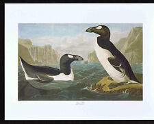 Great Auk Audubon & Havell - Color Bird Print
