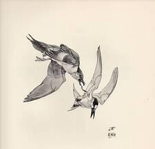 1937 BIRD PRINT ~ ARCTIC SKUA & SANDWICH TERNS