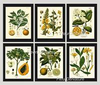 Unframed Botanical Print Set of 6 Antique Orange Lemon Lime Citrus Home Wall Art