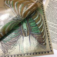 Antique Baillieres Synthetic Anatomy Book - Hand Painted Sheets - Part VII