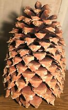 "11"" Coulter ""Widowmaker"" Pine Cone"