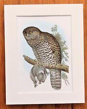 Australian Owl - Mounted Vintage John Gould Bird Print, 1960s Book Plate