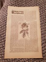 Passion-Flower - 1883 Book Print