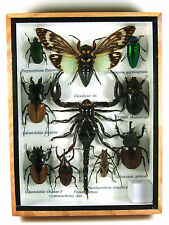 Real Butterfly Insect Bug Taxidermy Display Framed Box Small Set Gift gpasy 14