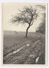 PHOTO ANCIENNE Arbre Campagne Champs Chemin Vers 1950 Paysage de Nature