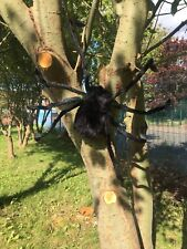 70cm Hairy Giant Spider Decoration Props Halloween Haunted House Indoor Outdoor