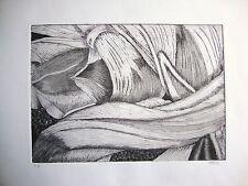 Tulipmania 9-nero-edizione limitata firmato morsura da studio Angela