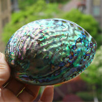 1x Fine Polished Abalone Shell 13x10 CM Seashells Shells Wedding Home Decor