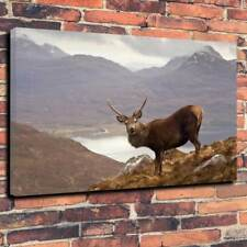 """Scottish Highland Wild Stag Printed Box Canvas Picture A1.30""""x20""""30mm Deep Frame"""