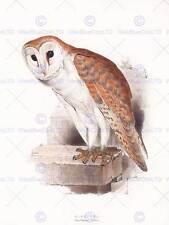 "PITTURA UCCELLI Gould Barn Owl 12x16"" art print poster lah520b"