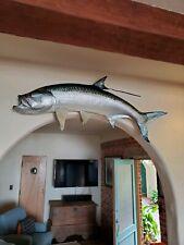 "72"" Large Atlantic Tarpon Fish mount excellent condition"
