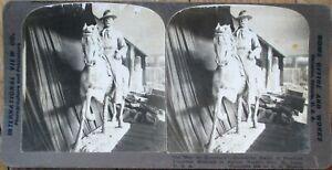 Teddy Roosevelt Statue in Butter 1905 Stereoview Card: St. Louis World's Fair