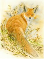 Red Fox Watercolour Print from an Original Watercolour Painting