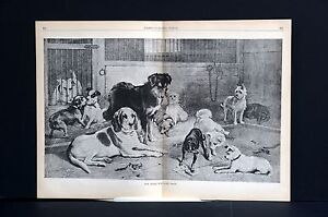 Rescue Dogs in Pound 1886 HOME for LOST FOUND DOGS PUPPIES Antique W. Hunt Print
