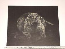 Vintage Sea otter - Black and White Print - Jane Hill Studio - 1977