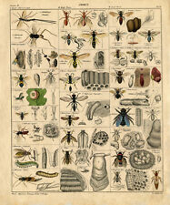 A3 Vintage Poster – Insects (Picture Bugs Beetles Grasshoppers Flies Ants Moths)