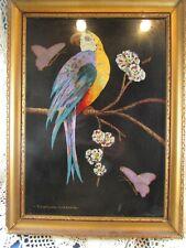 tableau composition naturelle sous verre perroquet ara p cupidon cayenne guyanne