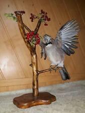 Taxidermy real Jay Stuffed Colored Bird Animal Hunting Handmade Life Size