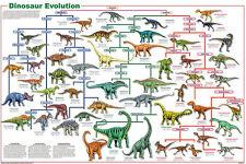 Dinosauer Evolution Educational Science Teacher Classroom Chart Poster 24x36