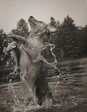 1989 Vintage BRUCE WEBER Golden Retriever In Lake Adirondack Dog Photo Art 11X14