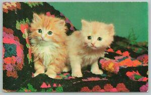 Van Wert Ohio Greetings~Kittens on Display~Standard Chrome Postcard