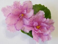 African Violet!King's Ransom!