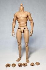 """Zc toys 1/6 scale muscular body fit pour 12"""" hot toys male head sculpt"""