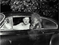 Pony vintage car auto humor horse print photograph cute pic picture funny photo