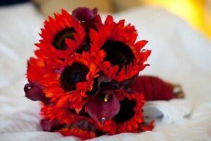 Sunflower Decorative Red Sun - Helianthus annuus - Annual Flower Seeds