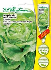 LATTUGA ICEBERG Ovation, SEMI,Lactuca sativa, verdure, chrestensen, PLC