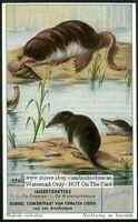 Eurasian Water Shrew 60+  Y/O Trade Ad Card