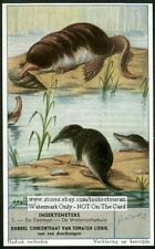 Eurasian Water Shrew 60+ Y/O Trade Ad Card