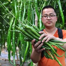 300 pcs Giant Long line pepper Seeds Delicious vegetables