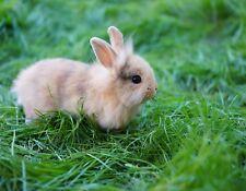 METAL FRIDGE MAGNET Small Tiny Tan Bunny Rabbit In Grass Bunnies Rabbits