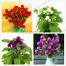 Gomphrena Globosa 100 PCS Seeds Garden Bonsai Flowers Plants Globe Amaranth NEW