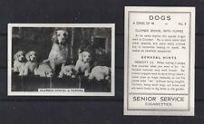 1939 Uk Dog Photograph Senior Service Cigarette Card Clumber Spaniel Family Pups