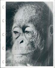 Headshot Sad Monkey Press Photo