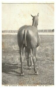 1907 The $25,000 Blue Bell The Hairless Horse Circus Freak Sideshow Postcard A90