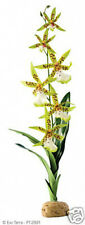 Exo Terra Reptile Terrarium Rainforest Plant Spider Orchid