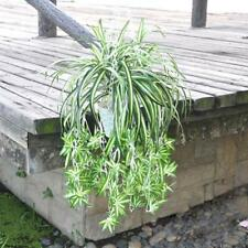 2 x Imitation Chlorophytum Spider Artificial Grass Leaf Plant Home Decor S M L
